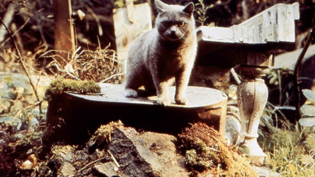 Pet Sematary 1989 Horror Movie For Halloween