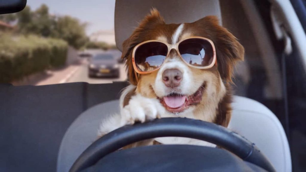 Customise Funny Dog Videos Like Driving a Car