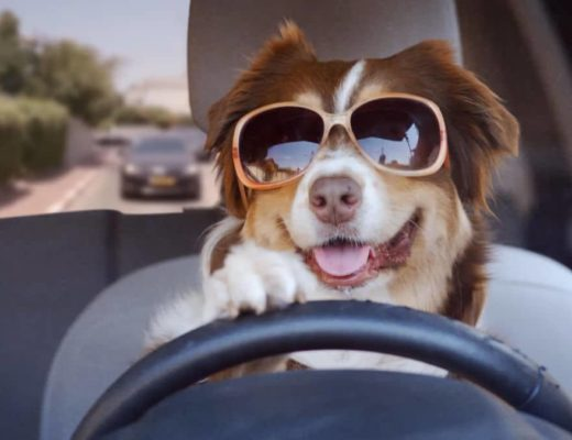 Edit Your Funny Dog Videos Using These Simple Tricks